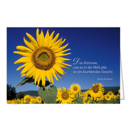 Motiv Sonnenblume