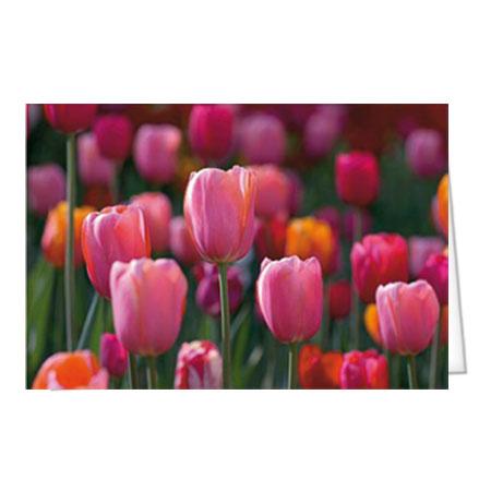 """Motiv 18 """"Tulpen violett"""""""